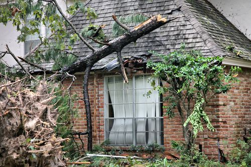 Your South Carolina Neighbor's Overhanging or Fallen Trees